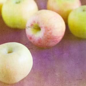 antoinette apple tree