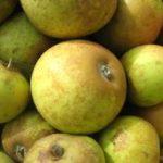 Brown Snout cider apple