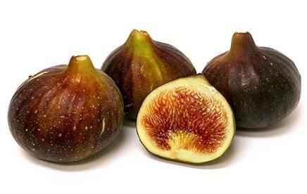 Brown-Turkey-fig