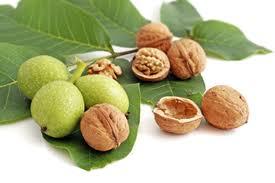 Walnut Trees | Product Categories | Yalca Fruit Trees