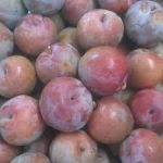 Donsworth blood plum
