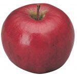 lady william apple
