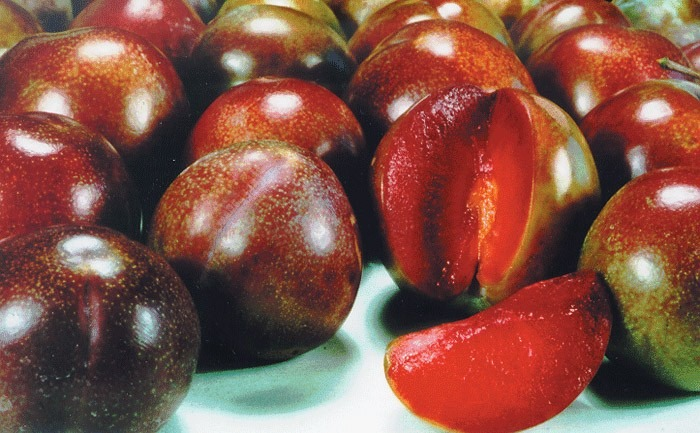 dwarf plum satsuma