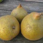 superfin pears