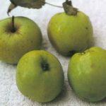 bulmers norman apple