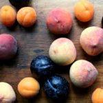 wilson plum