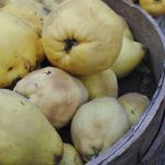 pineapple quince at market