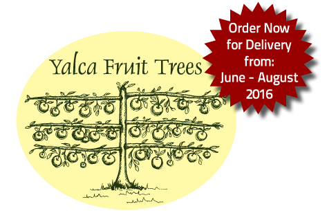 Fruit Tree Orders 2016