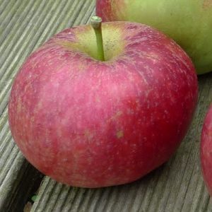 tydeman's early apple